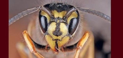 La fabbrica delle vespe di Iain Banks