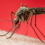 Zanzare di Davide Camparsi